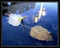 BLOG-IMG_1893-feuilles & reflet