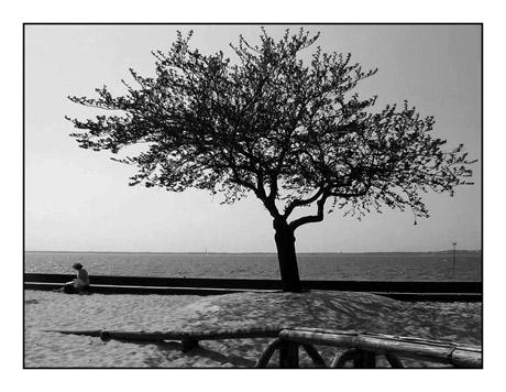 BLOG-IMG_3896-sous l'arbre de Péreire