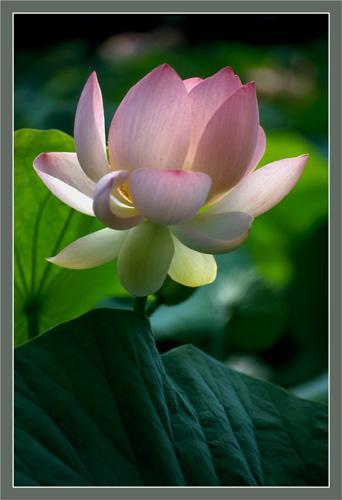 BLOG2-83-IMG1893-lotus