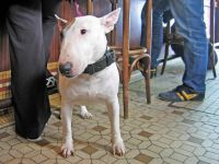 CP-IMG_4650-chien-de-bar