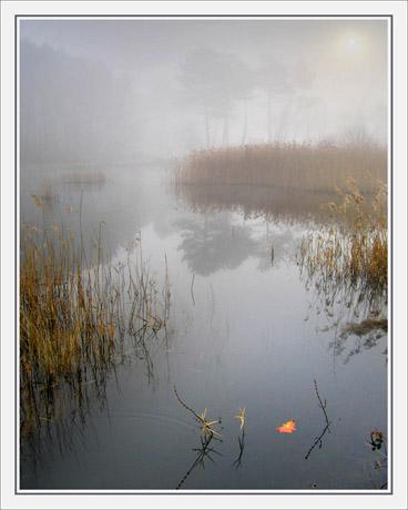 BLOG-IMG_2700-feuille sur l'étang du Teich