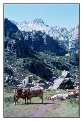 blog2-80-img602-vaches-en-montagne.jpg