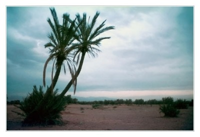 blog2-83-img2363-palmiers-et-atlas.jpg