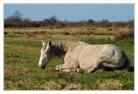 BLOG-DSC_1082-cheval blanc