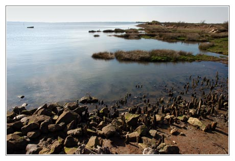 BLOG-DSC_1747-rivage et Bassin face Arcachon et presqu'île