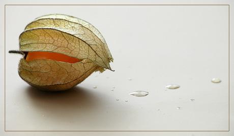 BLOG-DSC_1874-amour et pluie