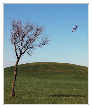 BLOG-DSC_2353-arbre et cerf-volant Biscarrosse