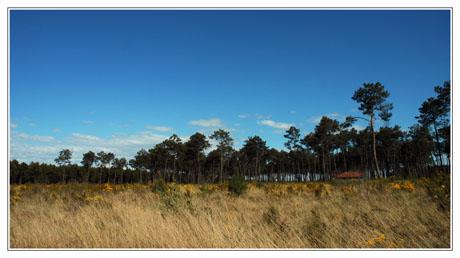 BLOG-DSC_2355-forêt et cabane