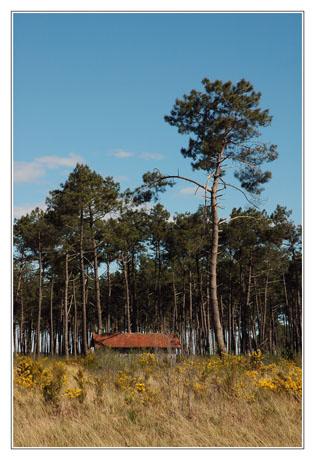 BLOG-DSC_2356-forêt et cabane
