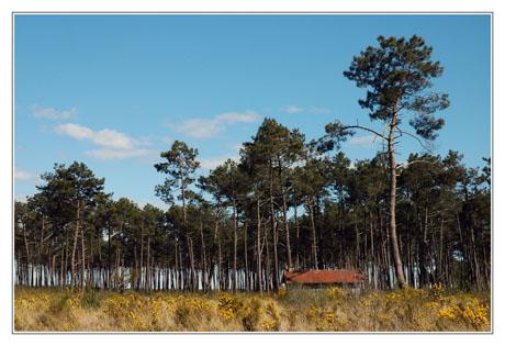 BLOG-DSC_2357-forêt et cabane 2