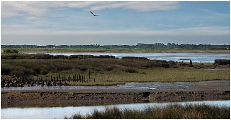 BLOG-DSC_2693-panorama le Teich