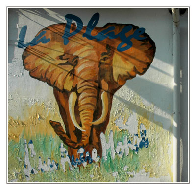 BLOG-DSC_3007-éléphant plage d'un autre monde