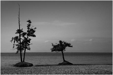 BLOG-DSC_3029-2 arbres en bord de lac N&B