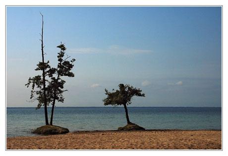BLOG-DSC_3029-2 arbres en bord de lac