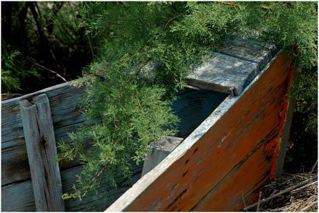 BLOG-DSC_3058-vieille barque tamaris Audenge