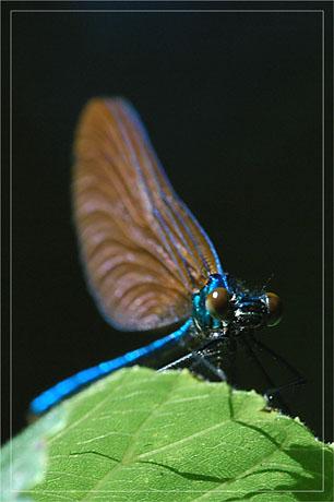 BLOG-DSC_3122-t'as de beaux yeux