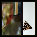 Avatar Scoopeo-DSC_1332-écaille chinée Avatar