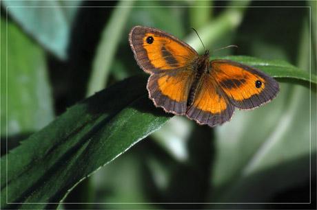 BLOG-DSC_3787-papillon