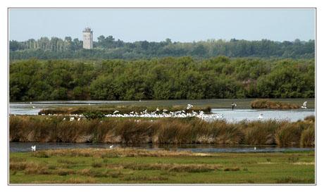 BLOG-DSC_3931-oiseaux gravières et château d'eau Audenge
