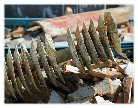 BLOG-DSC_4821-collecteurs à lamelles et débris de tuiles chaulées