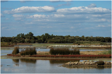 BLOG-DSC_5142-mouettes, salicorne, nuages lagune Quancard