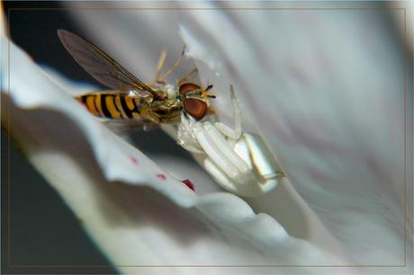 BLOG-DSC_3470-féroce albinos