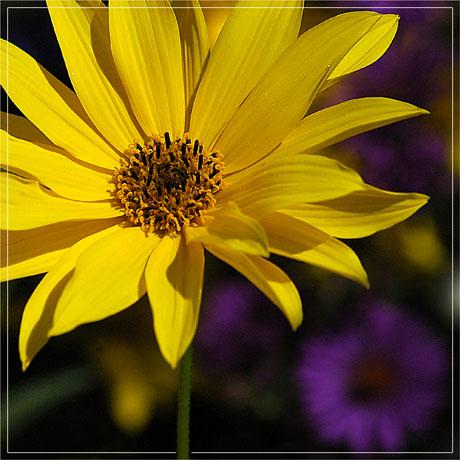 BLOG-DSC_4884-carré de fleurs
