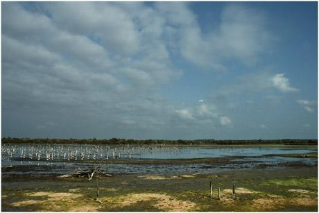 BLOG-DSC_5402-lagune grand-large asséchée