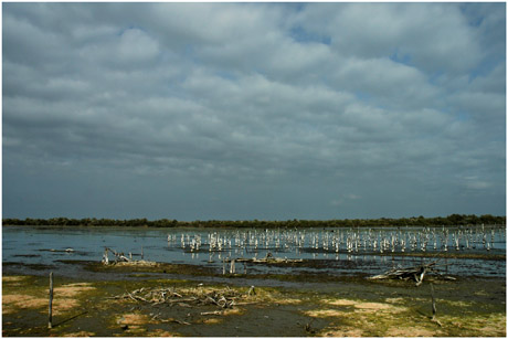 BLOG-DSC_5403-lagune grand-large asséchée