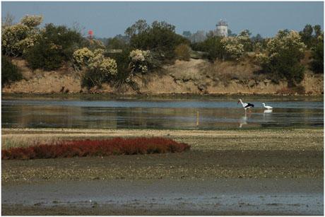 BLOG-DSC_5423-cigogne aigrette Audenge lagune asséchée
