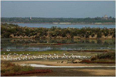 BLOG-DSC_5430-lagune Quancard Bassin et Audenge