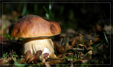 BLOG-DSC_5772-cèpe jardin