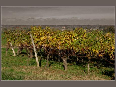 BLOG-IMG_0873-vigne et plaine effet couleur