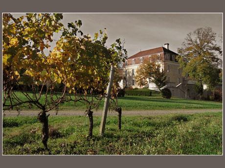 BLOG-IMG_0874-château Montus et vigne effet couleur