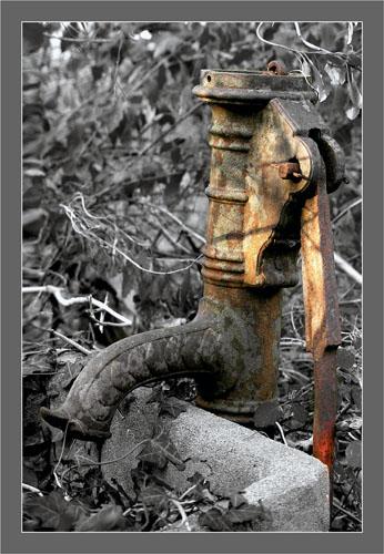 BLOG-DSC_6095-fontaine parc ornitho