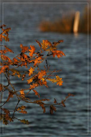 BLOG-DSC_6102-branche chêne roux et plan d'eau