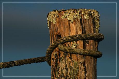 BLOG-DSC_6104-piquet bois et corde