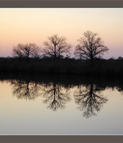 BLOG-DSC_6403-crépuscule sur 3 arbres dénudés