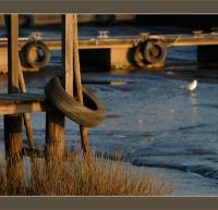 BLOG-DSC_6514-pontons et pneus marée basse