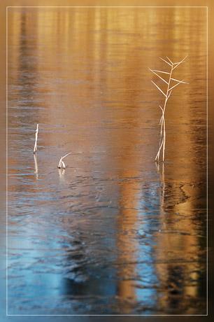 BLOG-DSC_6640-roseau et reflet glace