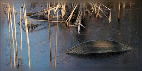 BLOG-DSC_6669-pneu roseaux étang gelé