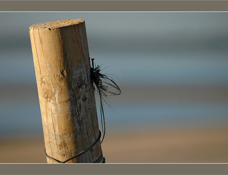 BLOG-DSC_6772-piquet plage Péreire