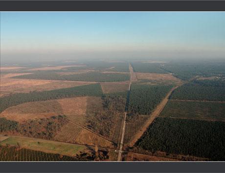 BLOG-DSC_7695-champs et forêts autour Andernos