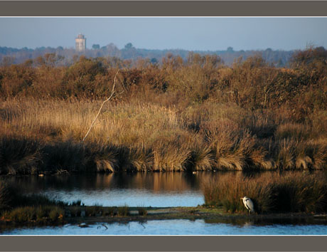 BLOG-DSC_6483-héron face chateau d'eau Audenge