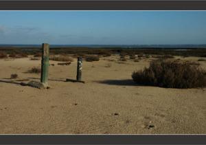 BLOG-DSC_7827-piquets d'amarrage, sable et salicorne Meyran