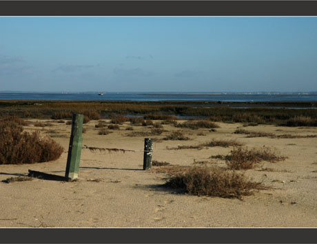 BLOG-DSC_7828-piquets d'amarrage, sable et salicorne Meyran