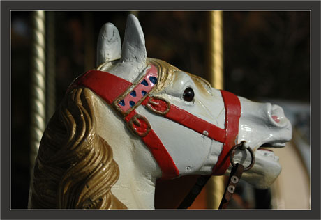 BLOG-DSC_7996-cheval manège