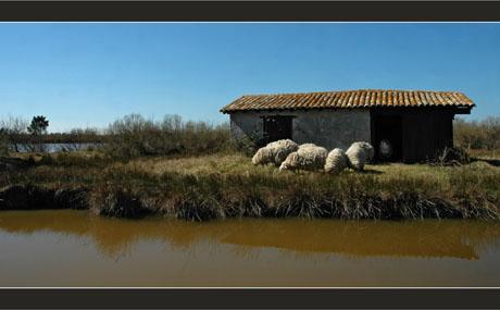 BLOG-DSC_8284-maisonnette parc et moutons