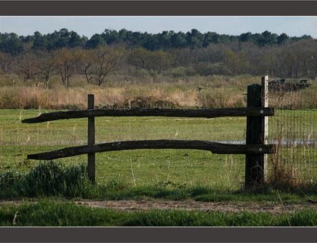 BLOG-DSC_8661-barrière plaines du Teich