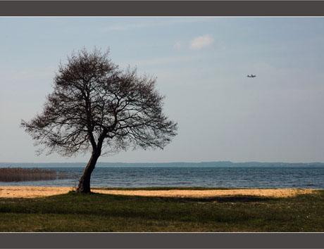 BLOG-DSC_8721-arbre et vol Bréguet Atlantic lac Sanguinet